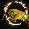 Цирки в Шереметьевском