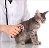 Ветеринарные клиники в Шереметьевском